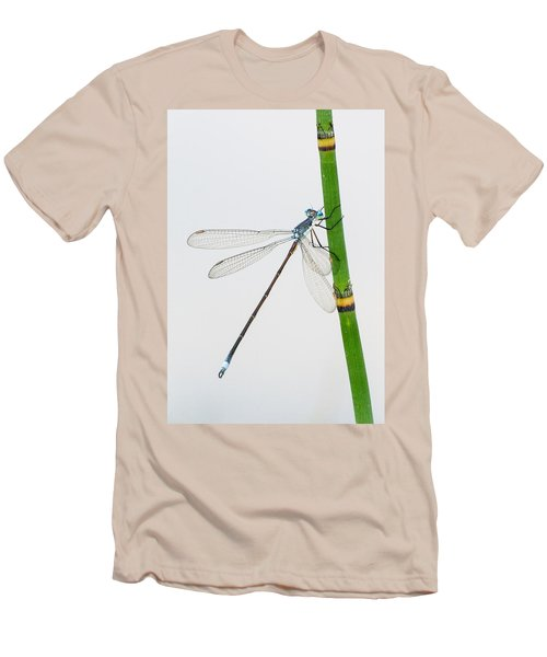 Damselfly On Horsetail Men's T-Shirt (Athletic Fit)