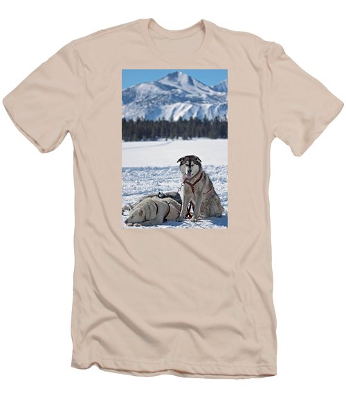 Dog Team Men's T-Shirt (Slim Fit) by Duncan Selby