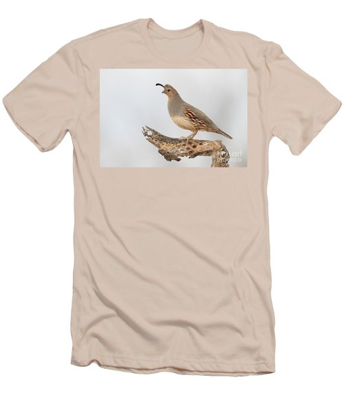 Female Gambel's Quail Men's T-Shirt (Athletic Fit)