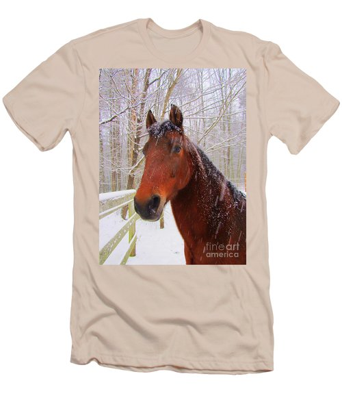 Majestic Morgan Horse Men's T-Shirt (Athletic Fit)