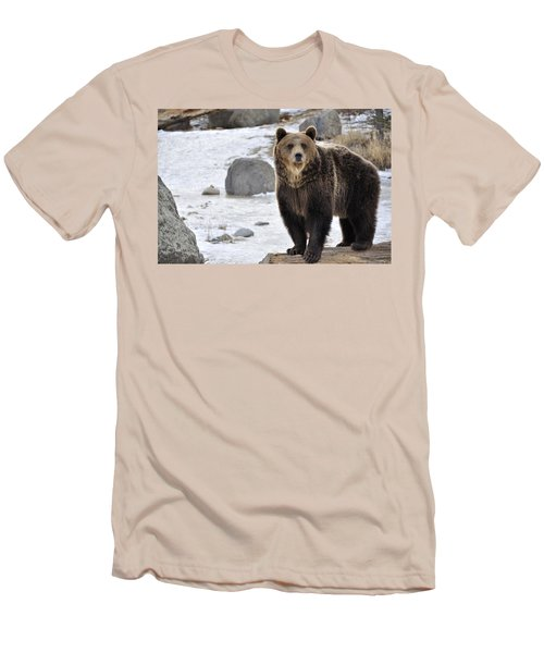 Montana Grizzly  Men's T-Shirt (Slim Fit) by Fran Riley