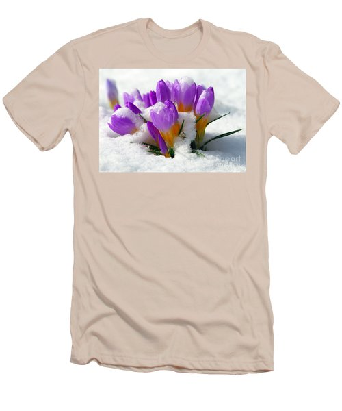 Purple Crocuses In The Snow Men's T-Shirt (Athletic Fit)