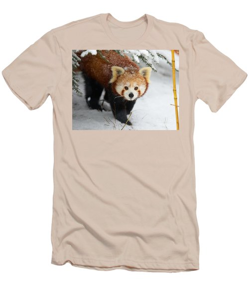 Red Panda In The Snow Men's T-Shirt (Athletic Fit)