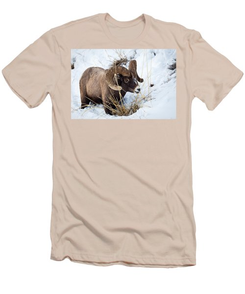 Rocky Mountain Bighorn Sheep Men's T-Shirt (Slim Fit)