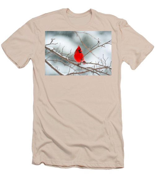 Snowy Cardinal Men's T-Shirt (Athletic Fit)