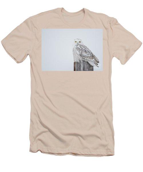 Snowy Owl Perfection Men's T-Shirt (Slim Fit) by Cheryl Baxter