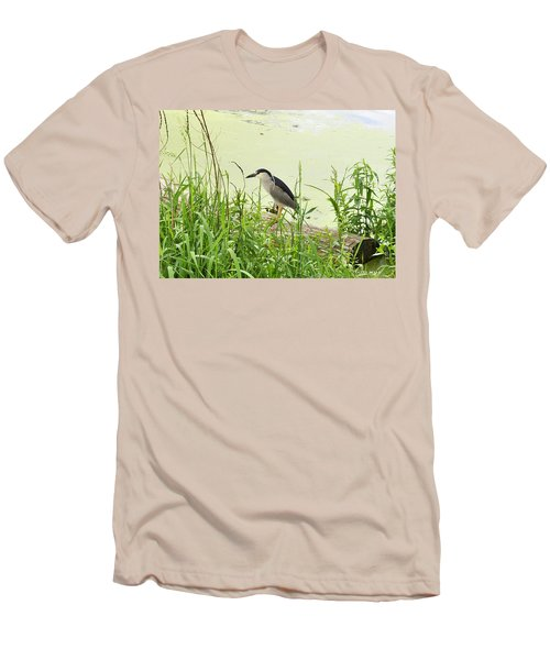 The Black-crowned Night Heron Men's T-Shirt (Athletic Fit)