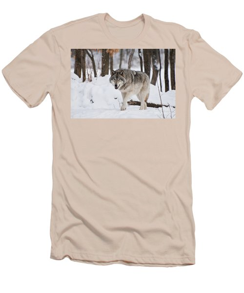 Men's T-Shirt (Slim Fit) featuring the photograph Timber Wolf In Winter Forest by Wolves Only