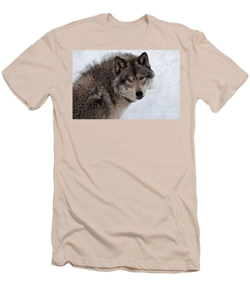 Men's T-Shirt (Slim Fit) featuring the photograph Timberwolf At Rest by Bianca Nadeau