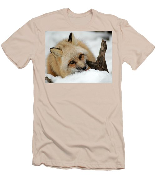 Winter Fox 2 Men's T-Shirt (Slim Fit) by Richard Bryce and Family