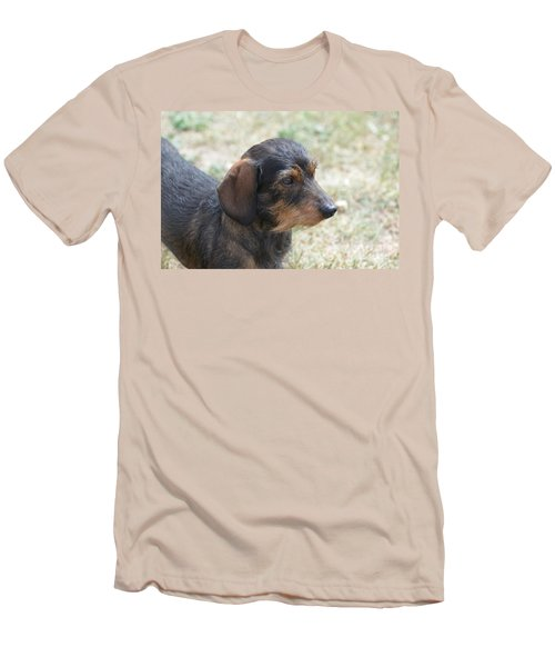Wire Haired Daschund Men's T-Shirt (Athletic Fit)