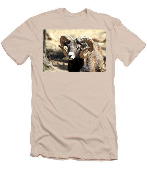 European Big Horn - Mouflon Ram Men's T-Shirt (Athletic Fit)