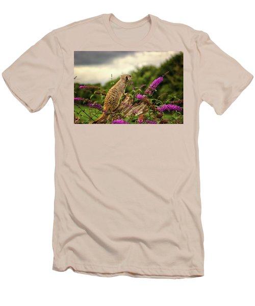 Meerkat Lookout Men's T-Shirt (Athletic Fit)