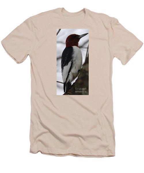 Red-headed Woodpecker Men's T-Shirt (Slim Fit) by Randy Bodkins