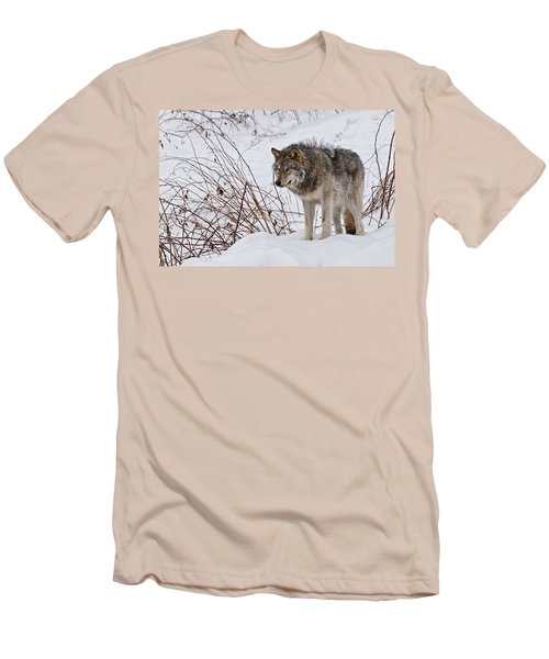 Men's T-Shirt (Slim Fit) featuring the photograph Timber Wolf In Winter by Michael Cummings
