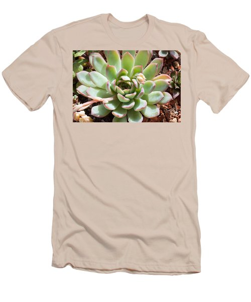 Men's T-Shirt (Slim Fit) featuring the photograph A Young Succulent Plant by Catherine Lau