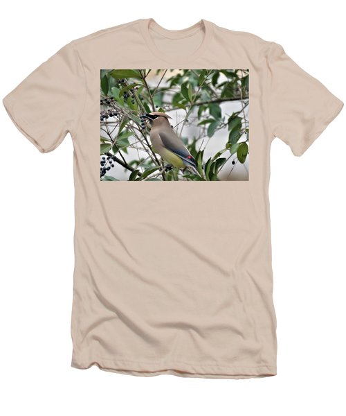 Cedar Waxwing 3 Men's T-Shirt (Athletic Fit)