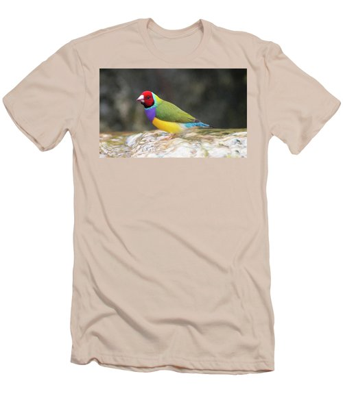 Colorful Lady Gulian Finch  Men's T-Shirt (Slim Fit) by Penny Lisowski
