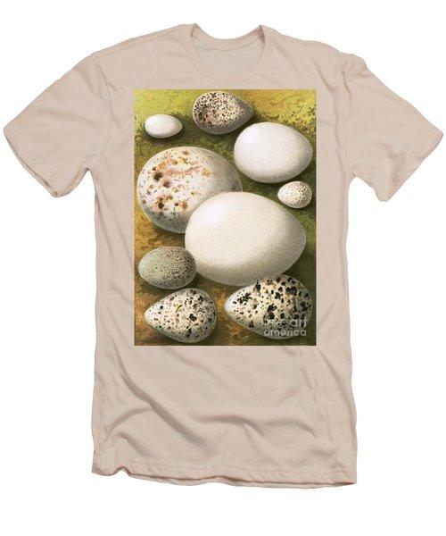 Eggs Men's T-Shirt (Athletic Fit)