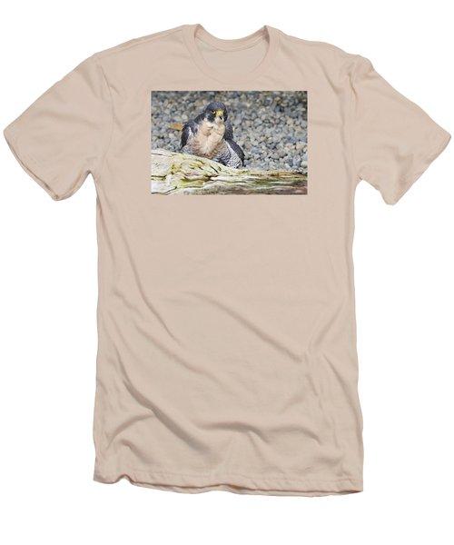 Peregrine Falcon 2 Men's T-Shirt (Slim Fit) by Harold Piskiel