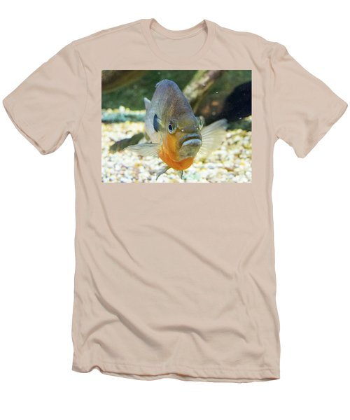 Piranha Behind Glass Men's T-Shirt (Athletic Fit)