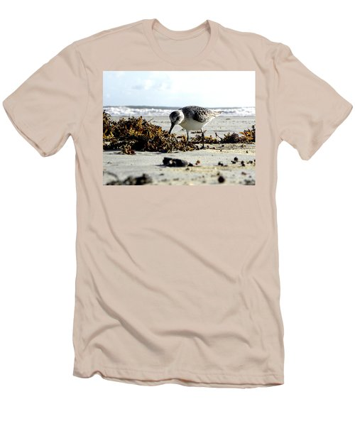 Plover On Daytona Beach Men's T-Shirt (Athletic Fit)