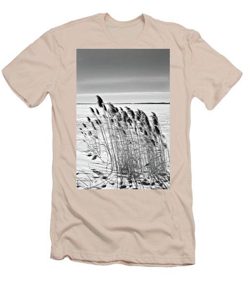 Reeds On A Frozen Lake Men's T-Shirt (Athletic Fit)