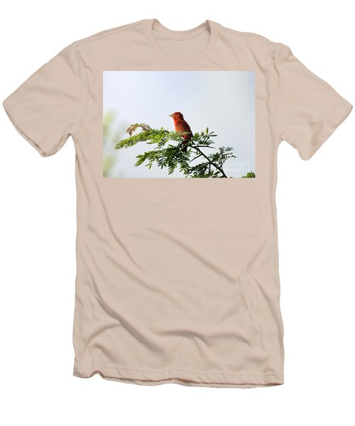 Summer Tanager In Mesquite Scrub Men's T-Shirt (Slim Fit) by Robert Frederick