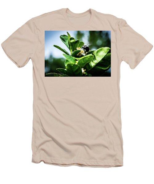 Sweet Bee Men's T-Shirt (Slim Fit) by Stefanie Silva