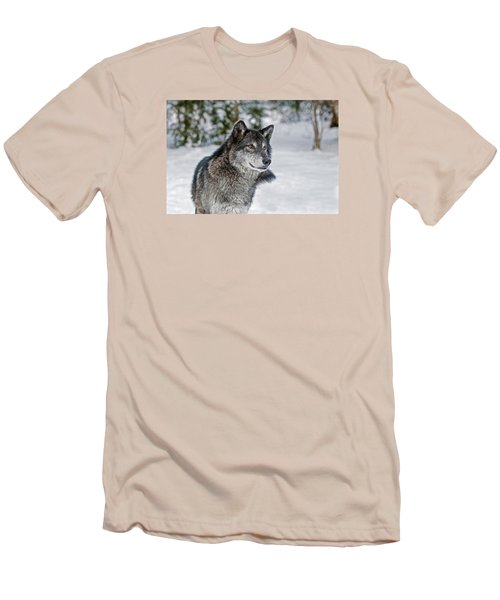 Wolf Portrait Men's T-Shirt (Athletic Fit)