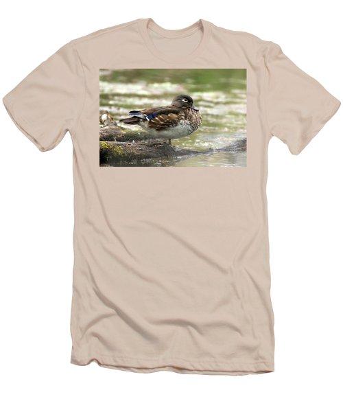 Wood Duck Hen Men's T-Shirt (Athletic Fit)