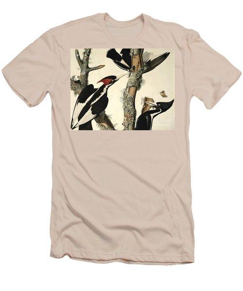Woodpecker Men's T-Shirt (Athletic Fit)