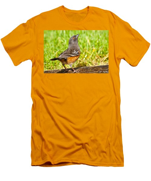Spotted Towhee Looking Up Men's T-Shirt (Slim Fit) by Jeff Goulden