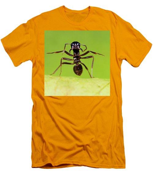 Japanese Slave-making Ant Polyergus Men's T-Shirt (Slim Fit) by Satoshi Kuribayashi