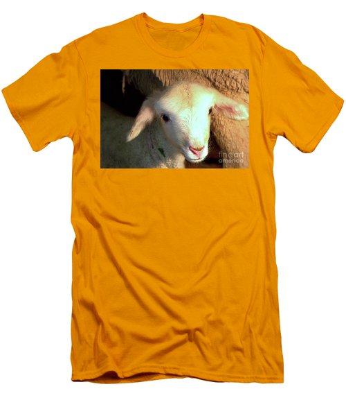 Baby Lamb Men's T-Shirt (Athletic Fit)