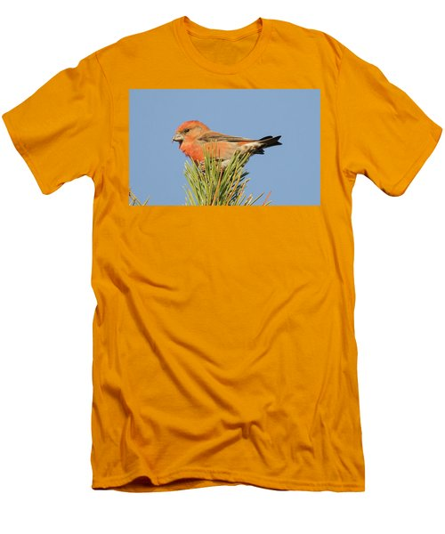 Crossbill Men's T-Shirt (Athletic Fit)