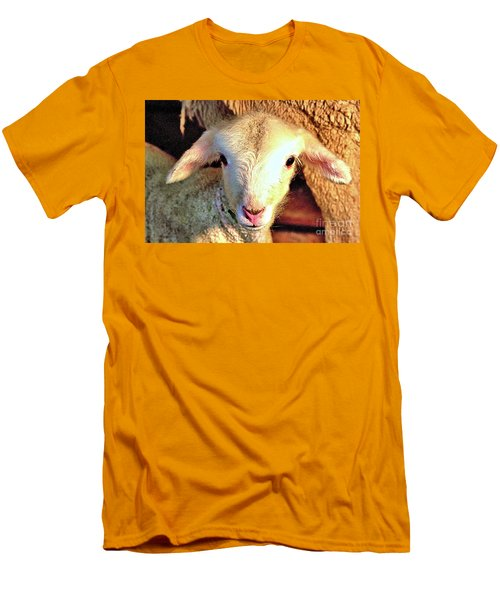 Curious Newborn Lamb Men's T-Shirt (Athletic Fit)