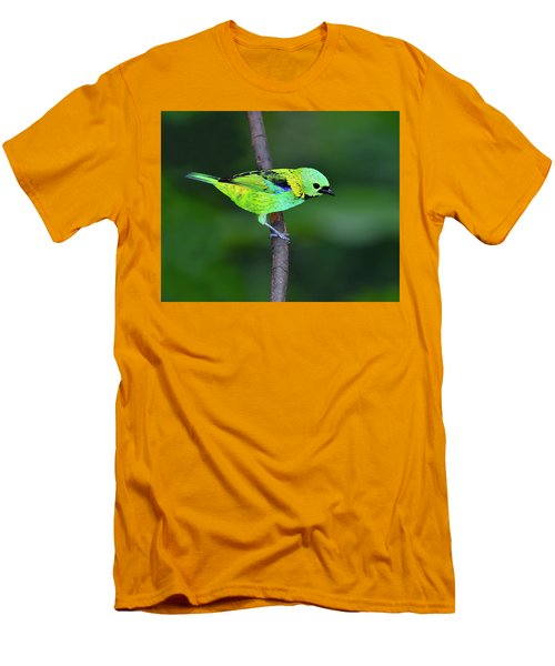 Forest Edge Men's T-Shirt (Slim Fit) by Tony Beck