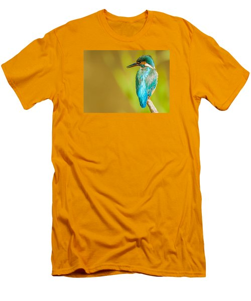 Kingfisher Men's T-Shirt (Slim Fit) by Paul Neville