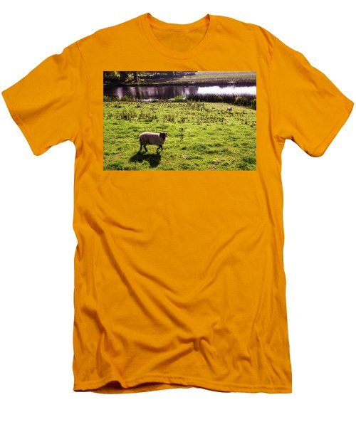 Sheep In Eniskillen Men's T-Shirt (Athletic Fit)