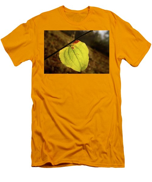 Single Greenbrair Leaf In Evening Sun Men's T-Shirt (Athletic Fit)