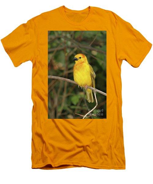 Taveta Golden Weaver #2 Men's T-Shirt (Athletic Fit)