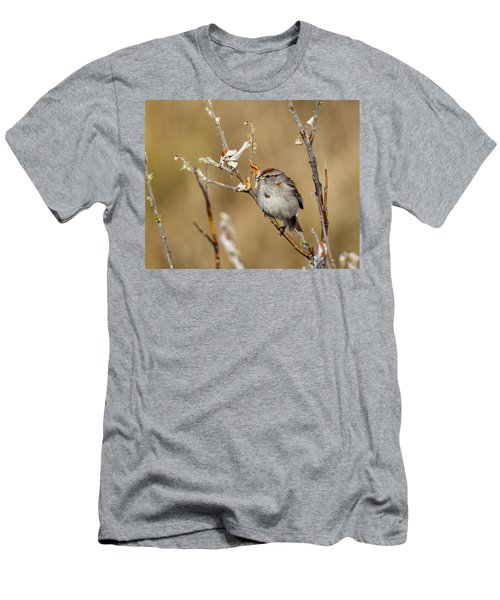 American Tree Sparrow Men's T-Shirt (Athletic Fit)