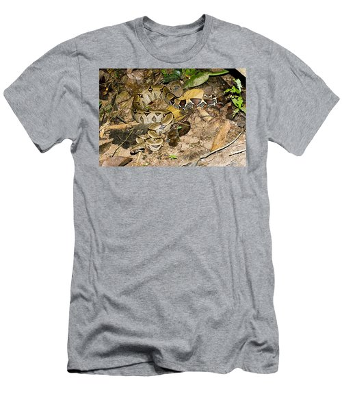 Boa Constrictor Men's T-Shirt (Athletic Fit)