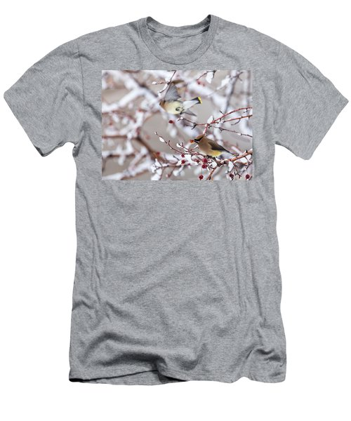 Cedar Waxwing Men's T-Shirt (Athletic Fit)