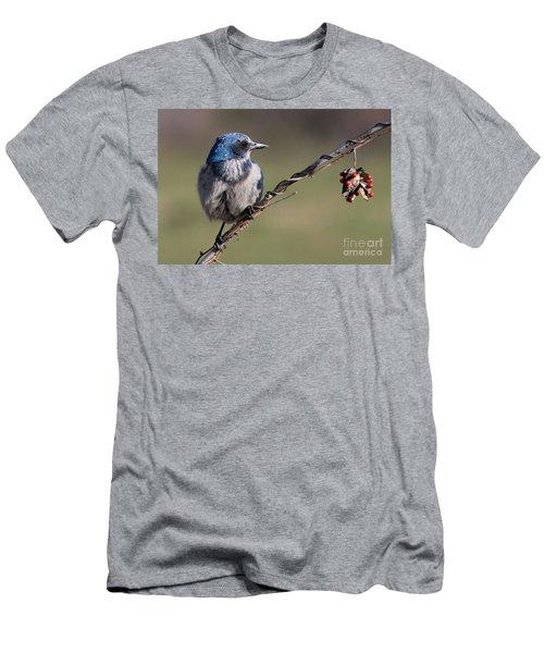 Florida Scrub Jay Men's T-Shirt (Athletic Fit)