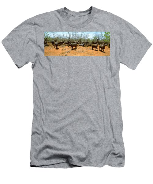 Herd Of Cape Buffaloes Syncerus Caffer Men's T-Shirt (Athletic Fit)