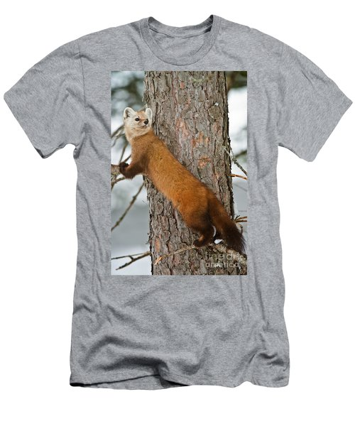 Pine Marten Men's T-Shirt (Athletic Fit)