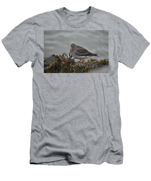 Purple Sandpiper Men's T-Shirt (Athletic Fit)