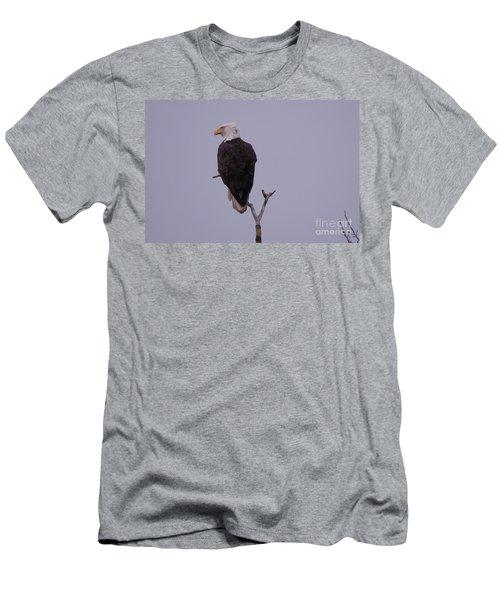 Solo  Bald Eagle Men's T-Shirt (Athletic Fit)